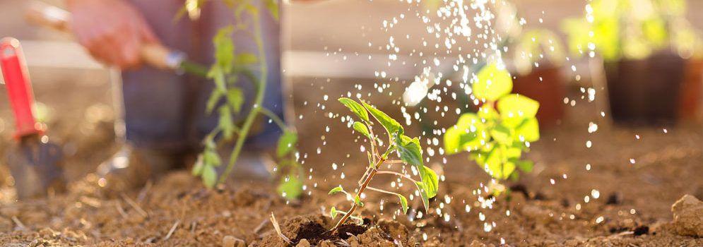 Preparing Your Garden For The Winter Season